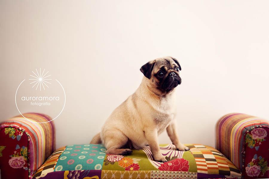 fotografia de mascotas, fotografo de mascotas murcia, fotografo de mascotas cartagena, fotografia de perros, fotografo de perros murcia, fotografo murcia